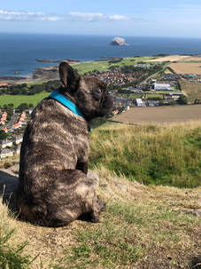 Monty Tours with paws Bass Rock
